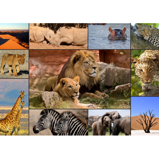 COLLAGE - WILDLIFE